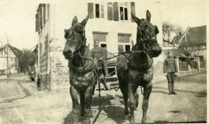 George Alfred Lindauer, with his two mules in Anhausen, Germany-1918.